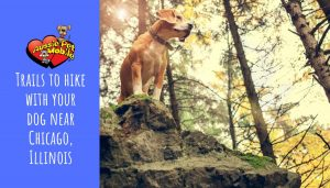 Trails to hike with your dog in Chicago, Illinois